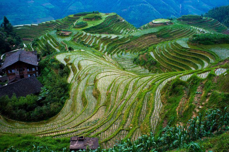 LongshengRiceTerraces china no copyright photographer severin.stalder