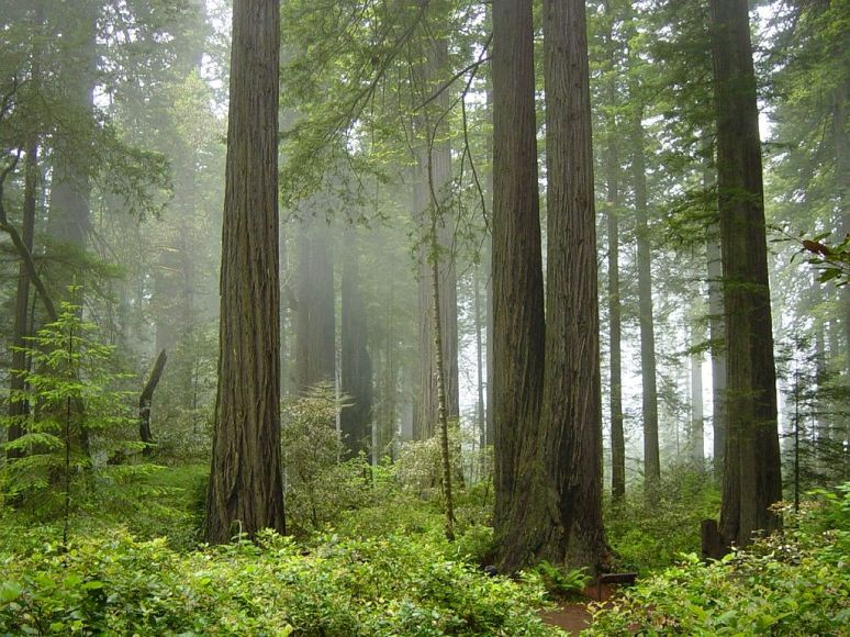 Redwood national park, no copyright photographer Michael Schweppe