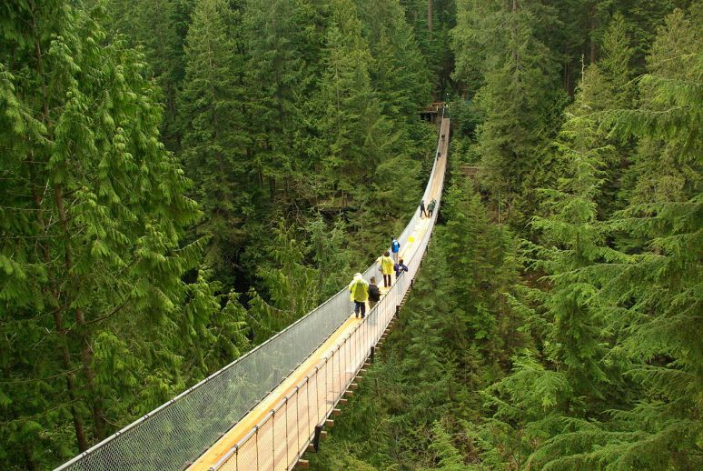 Capilano_suspension_bridge no copyright photographer David J Laporte